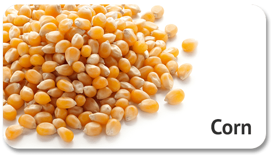 corn-global-sourcing-international-trade