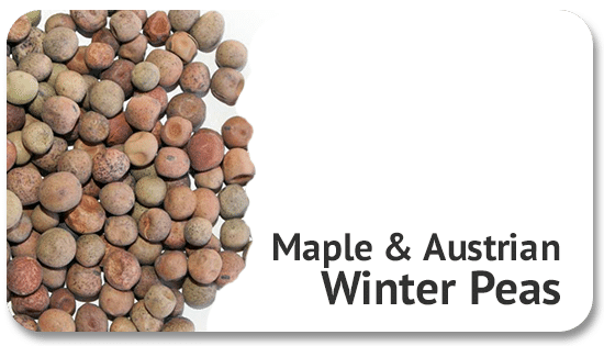 maple-austrian-winter-peas