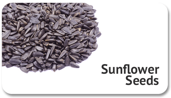 sunflower-seeds-global-trade-commodity