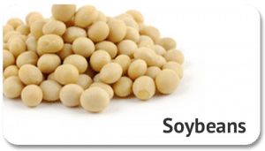 soybeans-commodity-global-sourcing