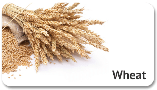 wheat-commodity